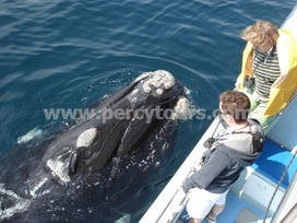 Southern Right Whale boat trips, Hermanus