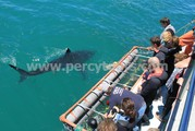 3.5 metre shark, boat and cage watchers, Gansbaai