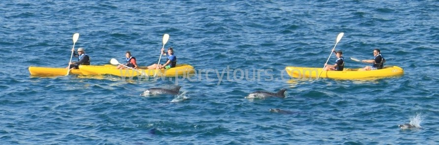 Kayaking with Dolphin in Walker Bay, Hermanus