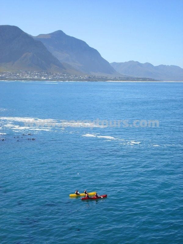 Kayaking with the whales at Hermanus