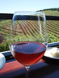 Wine Tours of Hermanus wine region, near Cape Town, South Africa