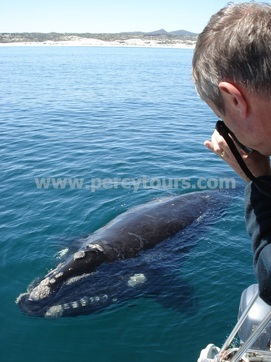 Boat trips to see the Whales, Hermanus