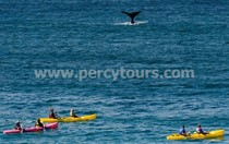 Kayaking with the Whales, Hermanus