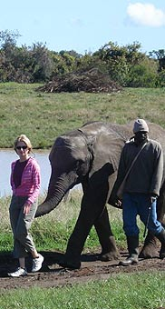 Walking with the elephants, Garden Route