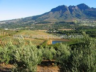 Mountain winery scenery, Cape Town, South Africa