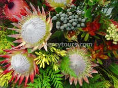 King Protea and Fynbos flowers, Cape Floral Kingdom