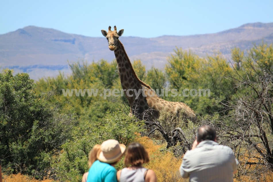 Safari walking tours, near Hermanus and Cape Town