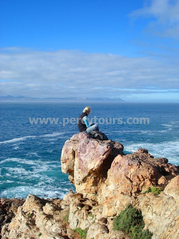 Whale watching from the cliffs at Hermanus