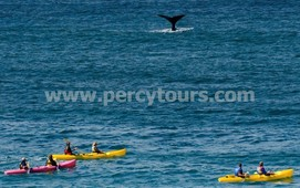Kayaking trips with the Whales in Hermanus
