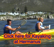 Kayak with the Whales of HermanusPicture