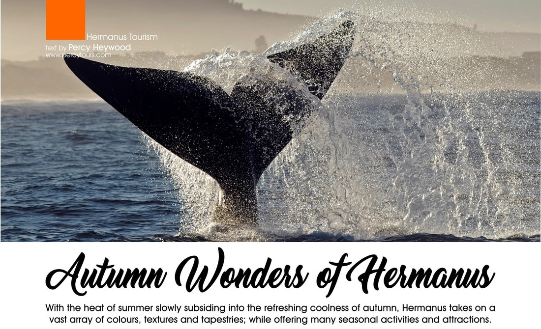 Whale Talk article by Percy Tours, Hermanus