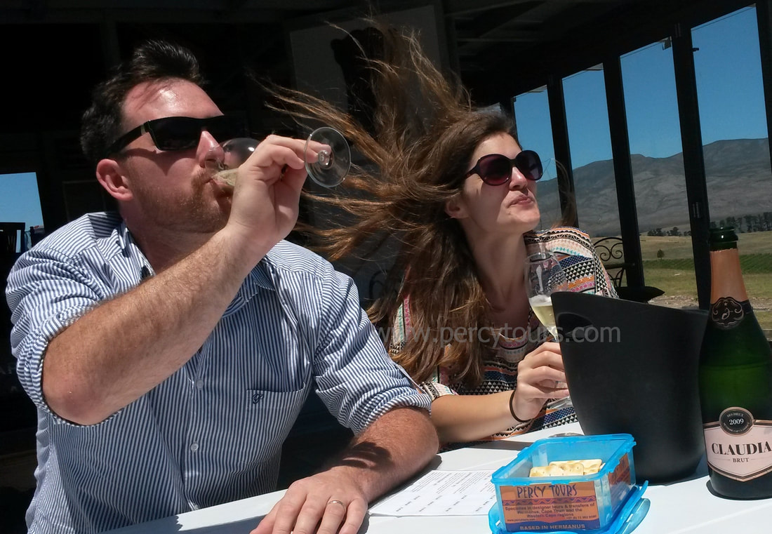Hermanus wine tours are great fun and you can visit over 21 wineries, sampling 120 wines, near Cape Town, South Africa